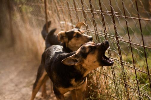Aggression「Barking Dogs」:スマホ壁紙(7)