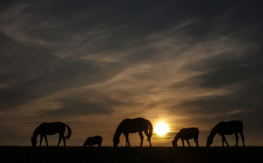 Horse「Rustic sunset view with grazing horses」:スマホ壁紙(7)