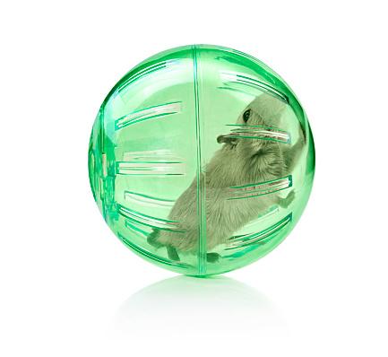 Walking「Pet in a ball」:スマホ壁紙(3)