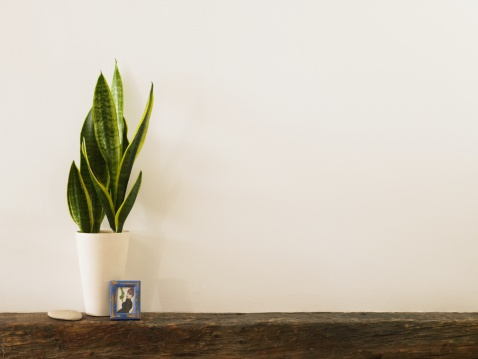 Mantelpiece「Plant and picture on a mantelpiece」:スマホ壁紙(9)