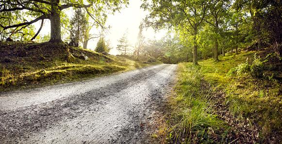 Gravel「Gravel road through forest」:スマホ壁紙(13)