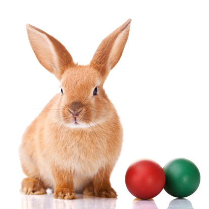 Baby animal「Ginger Easter bunny with two colorful balls on the side」:スマホ壁紙(0)