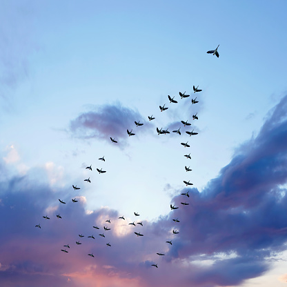 Flock Of Birds「XL migrating canada geese」:スマホ壁紙(4)