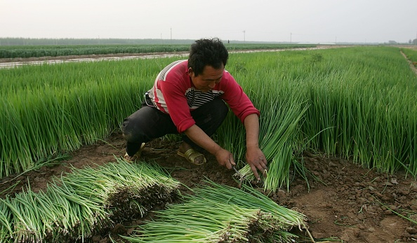 Baoding「Farmers Work The Land In Rural China」:写真・画像(8)[壁紙.com]