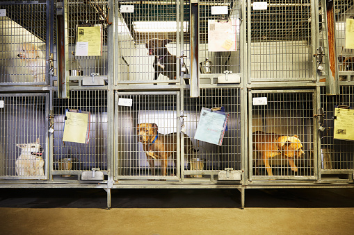 Medium Group Of Animals「Dogs in cages in an animal shelter」:スマホ壁紙(9)