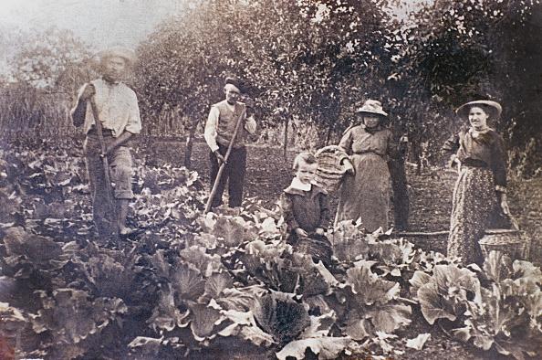 Italian Culture「Cabbage field」:写真・画像(9)[壁紙.com]