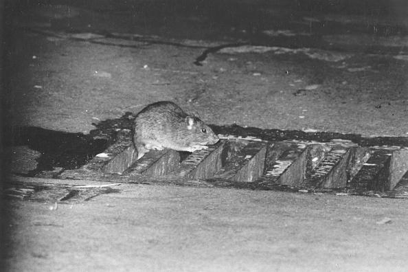 Street「Rat」:写真・画像(9)[壁紙.com]