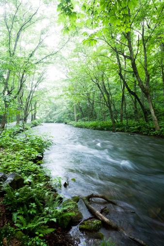 Satoyama - Scenery「Woodland Stream」:スマホ壁紙(8)