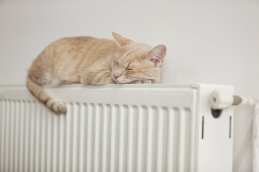 Feline「Lazy cat」:スマホ壁紙(10)
