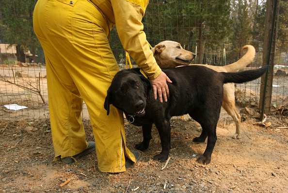 Pets「Butte Lighting Fires In Northern California Grow To Force Evacuations」:写真・画像(12)[壁紙.com]
