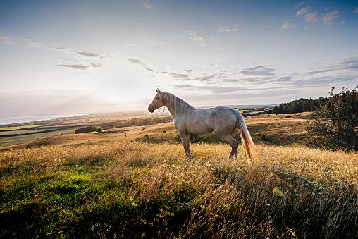 Horse「Palomino horse at sunset」:スマホ壁紙(6)