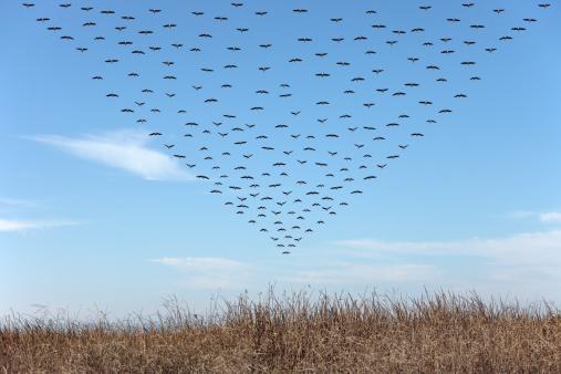 Flock Of Birds「Geese in Triangular Pattern」:スマホ壁紙(12)