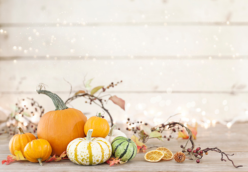 Branch - Plant Part「Autumn holiday pumpkin arrangement against an old white wood background」:スマホ壁紙(8)