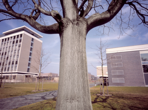 North Brabant「Large tree in front of electronics laboratories.」:スマホ壁紙(18)