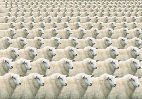 Conformity「Digital composite of flock of identical sheep, full frame」:スマホ壁紙(9)