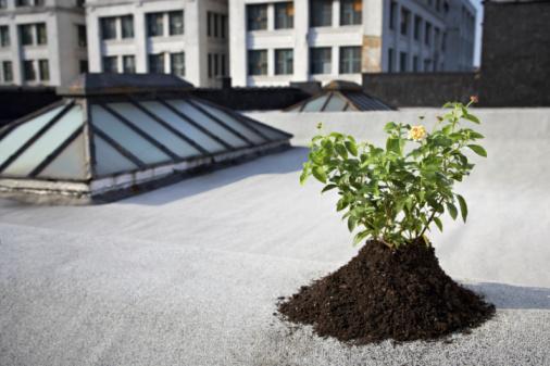 Planting「Aspen sapling on rooftop」:スマホ壁紙(15)