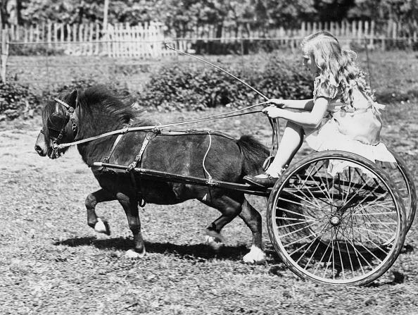 Horse「Pony And Cart」:写真・画像(4)[壁紙.com]