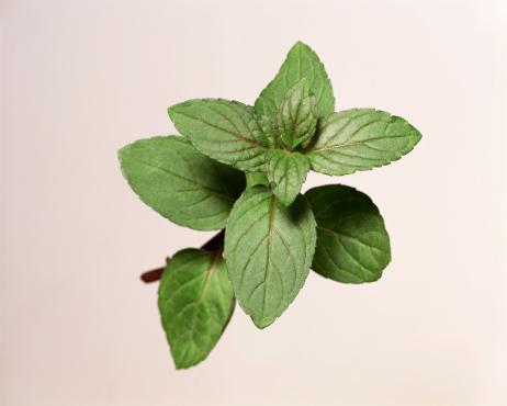 Mint Leaf - Culinary「Mint sprig」:スマホ壁紙(1)