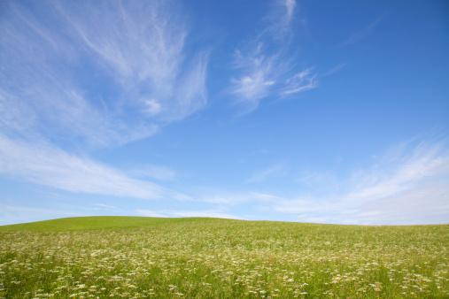 Wildflower「Wide field grassy field.」:スマホ壁紙(8)