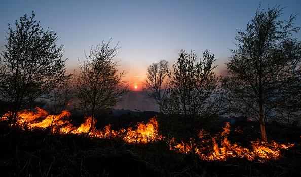 Hill「Cleveland Fire Brigade Dampen Down A Woodland Fire」:写真・画像(14)[壁紙.com]