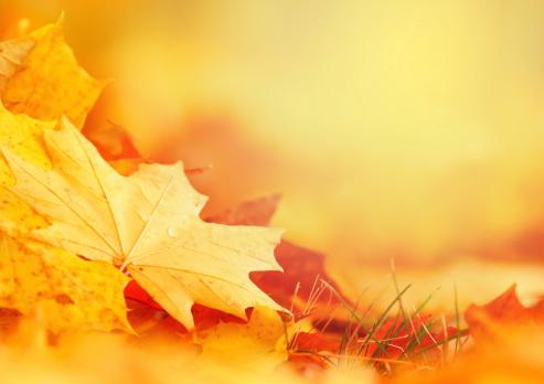 November「Falling Leaf Frame」:スマホ壁紙(9)