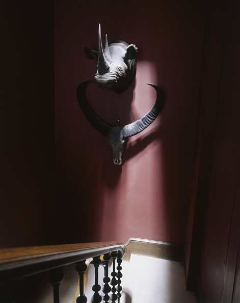 Stuffed「Eastnor Castle Trophies」:写真・画像(19)[壁紙.com]