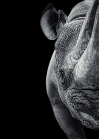 Horned「Rhinoceros」:スマホ壁紙(4)