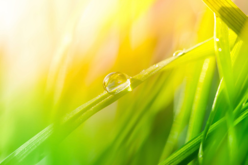 Blade of Grass「Morning dew on blades of grass during sunrise or sunset」:スマホ壁紙(9)
