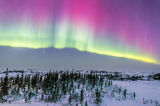 Boreal Forest「Pink aurora over boreal forest in Canada.」:スマホ壁紙(5)