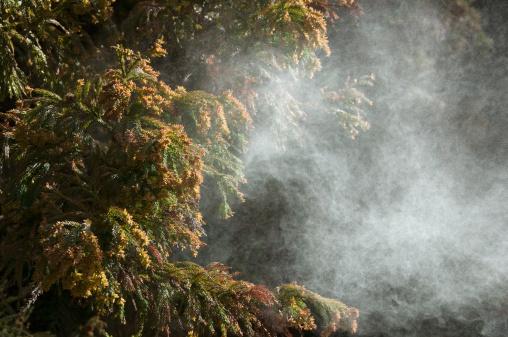 Satoyama - Scenery「Japanese cedar pollen」:スマホ壁紙(1)