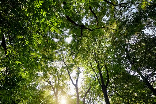 Below「Trees at backlight seen from below」:スマホ壁紙(19)