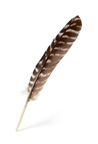 Turkey - Bird「feather」:スマホ壁紙(12)
