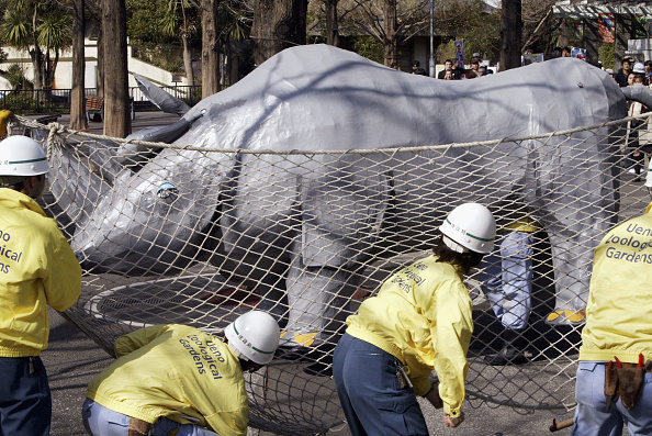 Effort「Employees Take Part In Emergency Earthquake Training Drill At Tokyo Zoo」:写真・画像(15)[壁紙.com]