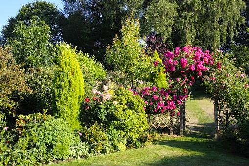 ピンク色「Roses on  arch in sun drenched English garden.」:スマホ壁紙(4)