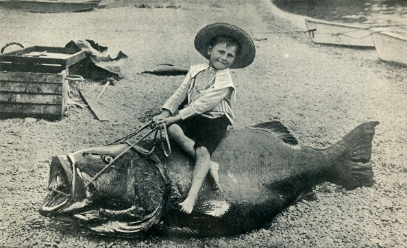 Manufactured Object「A Fishy Steed! - A Black Sea-Bass - Weight 363 Pounds」:写真・画像(13)[壁紙.com]