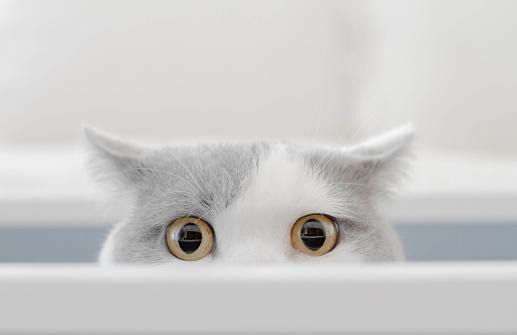 Mischief「Cat in a box peeking out of a box」:スマホ壁紙(5)