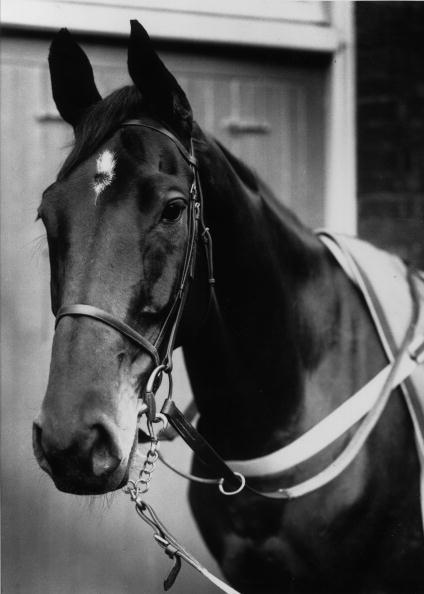 Horse「Golden Miller」:写真・画像(7)[壁紙.com]