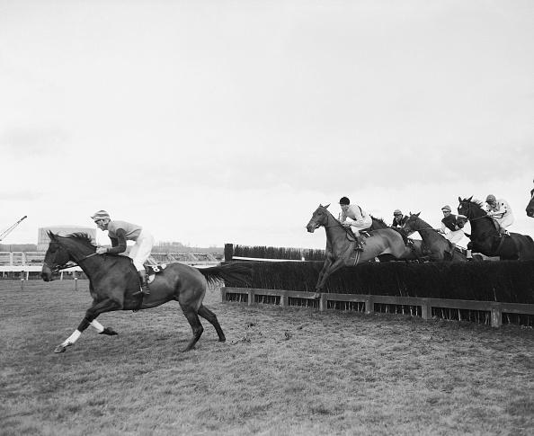 Racehorse「Arkle Leads」:写真・画像(16)[壁紙.com]