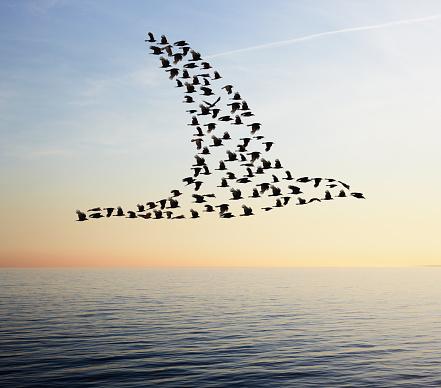 Digital Composite「Flock of birds in bird formation flying above sea」:スマホ壁紙(14)