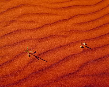 Dry「Dune ripples close up」:スマホ壁紙(11)