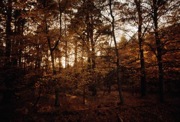 New Forest「Autumn  Light」:写真・画像(14)[壁紙.com]