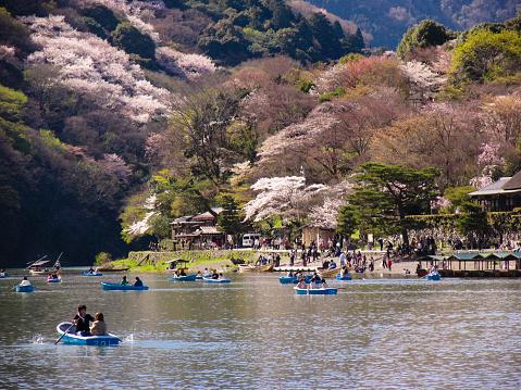 花見「Cherry Blossom Festival at Kamo River in Kyoto」:スマホ壁紙(10)