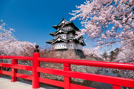 Castle「Cherry blossoms at Hirosaki Castle, Aomori Prefecture, Honshu, Japan」:スマホ壁紙(10)