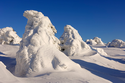 Harz Mountain「Snow-covered Norway spruce trees (Picea abies). Brocken (Mountain), National Park Hochharz, Saxony-Anhalt, Germany, Europe.」:スマホ壁紙(12)