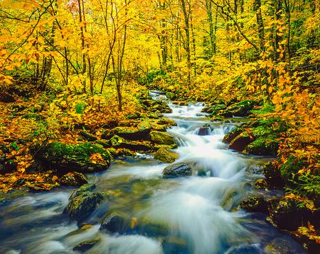 グリーン山脈「秋のアンダーヒル州立公園の緑の山々、VT」:スマホ壁紙(8)