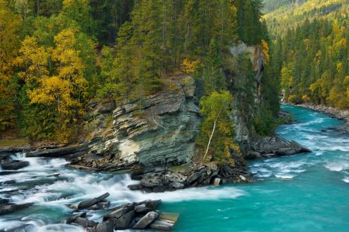 Aspen Tree「Autumn Colours of Rearguard Falls」:スマホ壁紙(5)