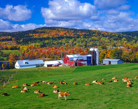 グリーン山脈「秋の色、農場には、緑の山々、VT」:スマホ壁紙(0)
