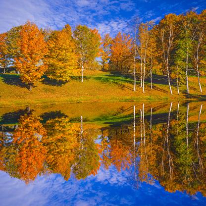グリーン山脈「池の反射と秋の色砂糖カエデ、VT」:スマホ壁紙(16)
