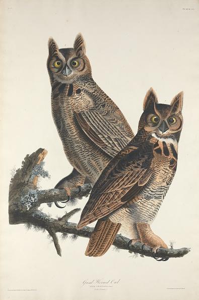 Horned「Great Horned Owl」:写真・画像(16)[壁紙.com]