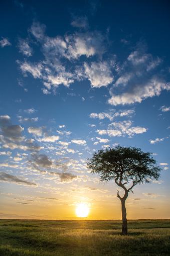 Safari「Mara morning」:スマホ壁紙(4)